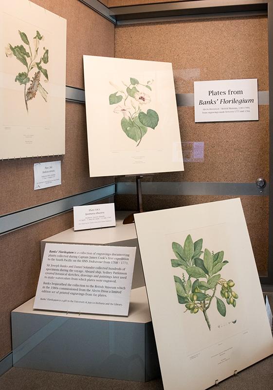 """Banks Florilegium"" display in August 2018"