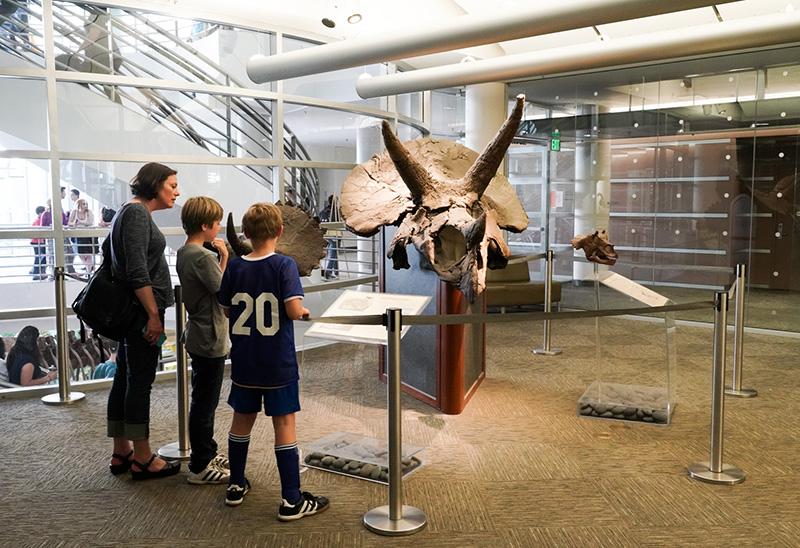 Triceratops skull near library entrance in April 2018