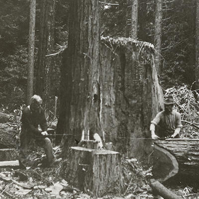 Two men next to a redwood tree